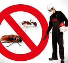 شركة مكافحة حشرات بالقنفذة بمكة