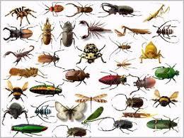 شركة مكافحة حشرات بالتربةبمكه